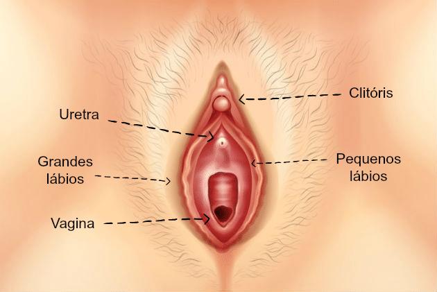 clitóris: o prazer de Vênus